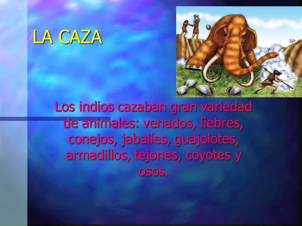 LA CAZA Los indios cazaban gran variedad de animales: venados, liebres, conejos, jabalíes, guajolotes, armadillos, tejones, coyotes y osos.