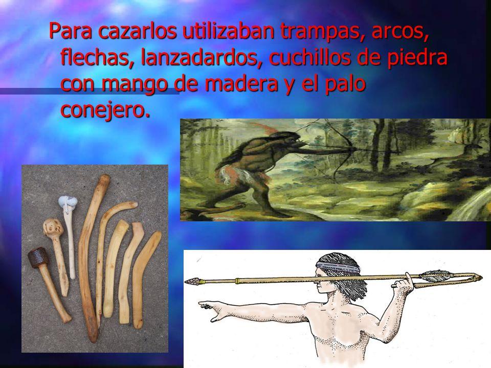Para cazarlos utilizaban trampas, arcos, flechas, lanzadardos, cuchillos de piedra con mango de madera y el palo conejero.