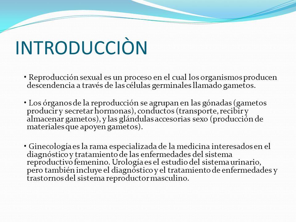 Asombroso El Diagrama Del Sistema Reproductivo Femenino Marcado ...
