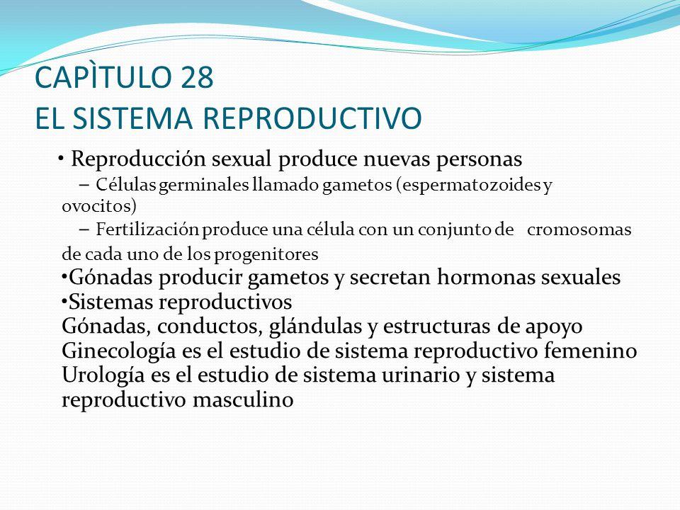 El sistema reproductivo Esquema conferencia - ppt descargar