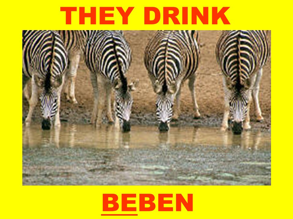 THEY DRINK BEBEN