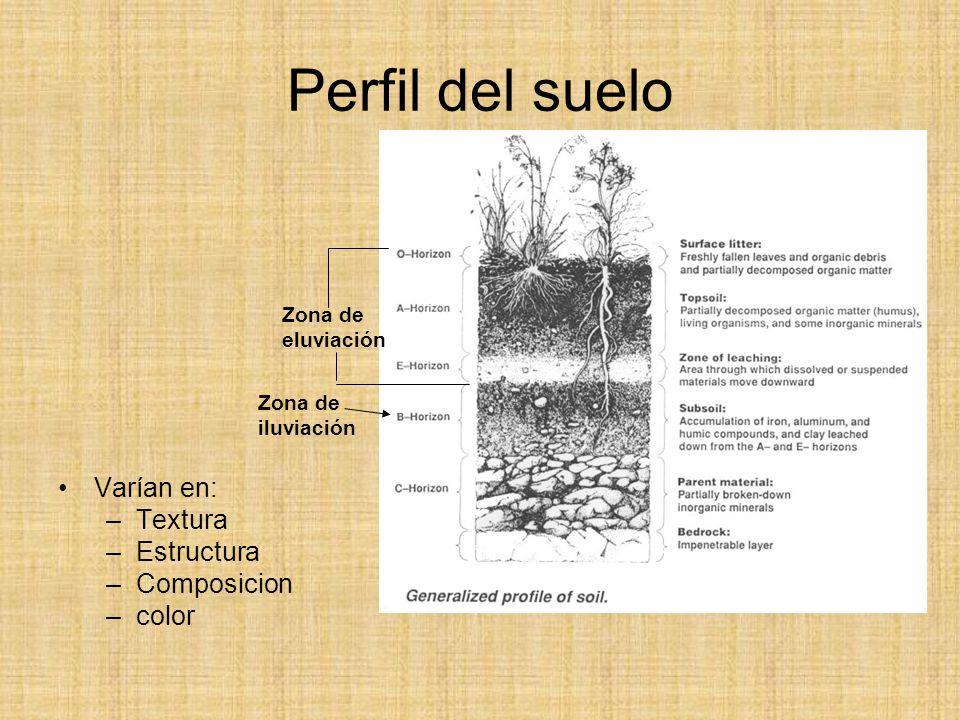 Meteorizaci n erosi n y suelos ppt video online descargar for Perfil del suelo wikipedia