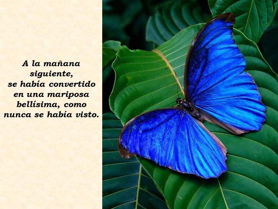 A la mañana siguiente, se había convertido en una mariposa bellísima, como nunca se había visto.
