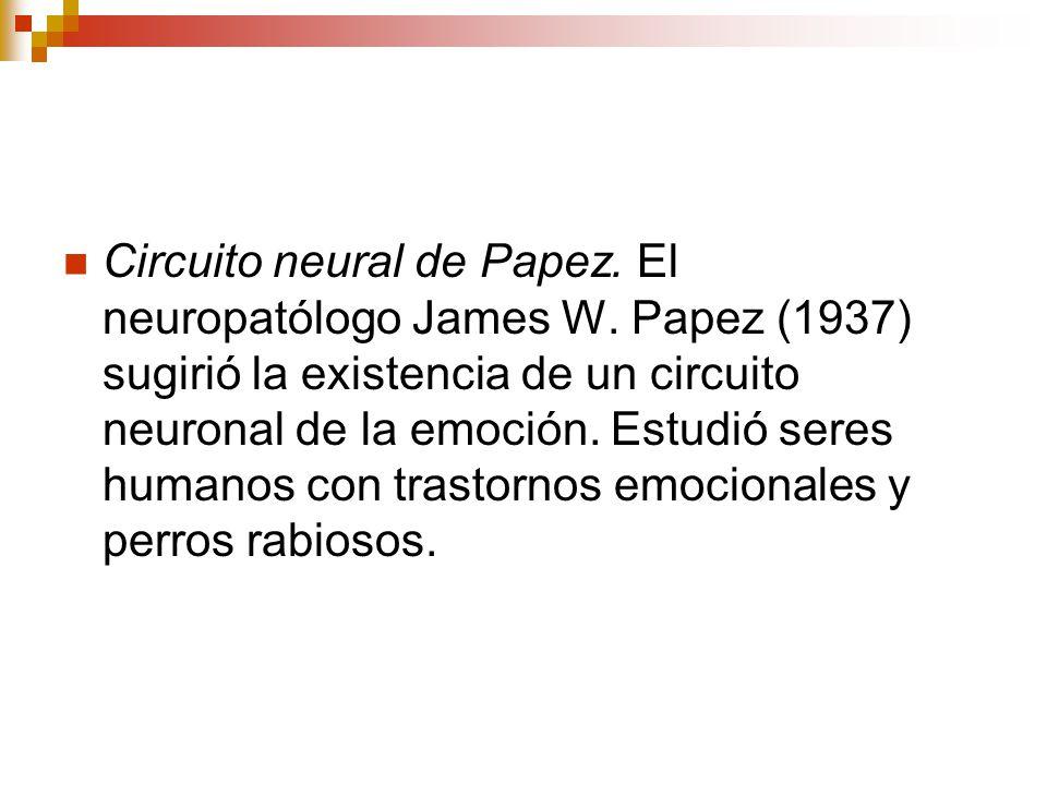 Circuito Neuronal : Bases biológicas de las emociones ppt descargar