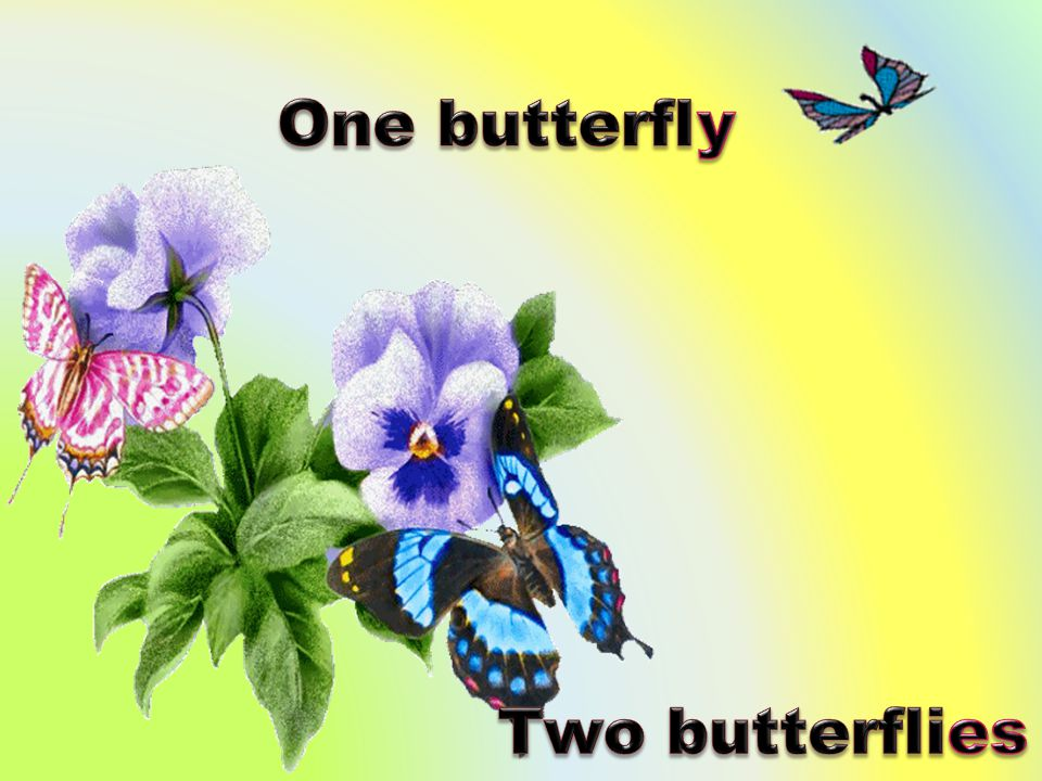 One butterfly Two butterflies