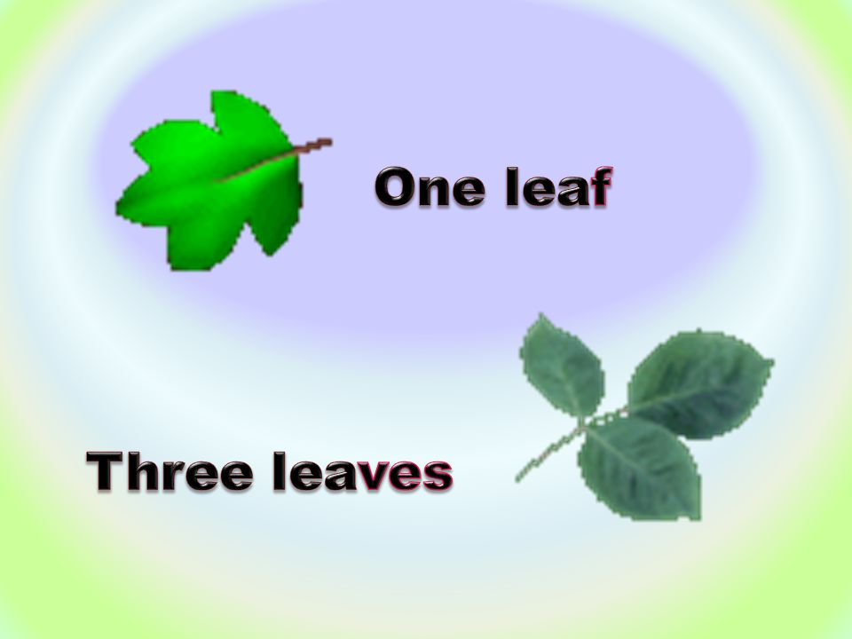 One leaf Three leaves