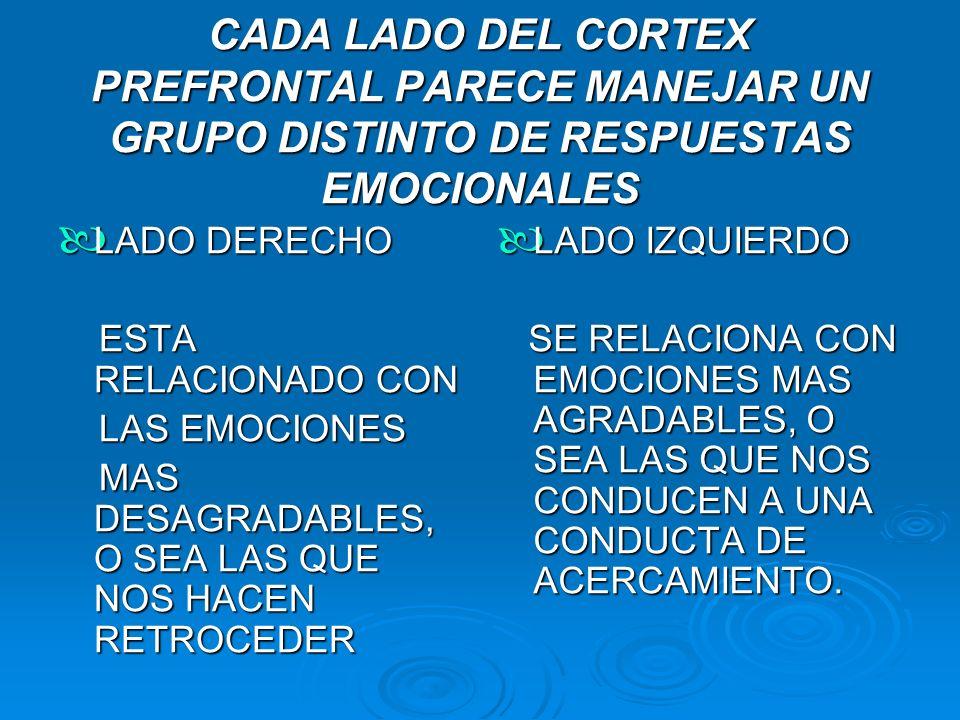 CADA LADO DEL CORTEX PREFRONTAL PARECE MANEJAR UN GRUPO DISTINTO DE RESPUESTAS EMOCIONALES