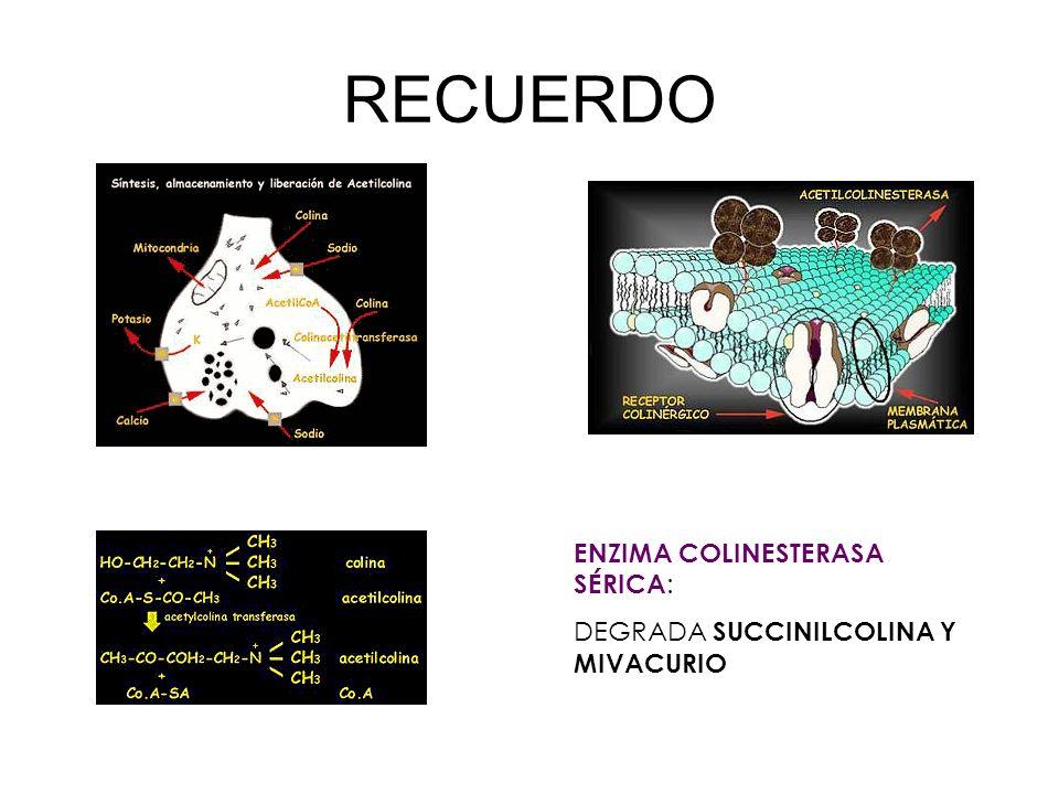 RECUERDO ENZIMA COLINESTERASA SÉRICA:
