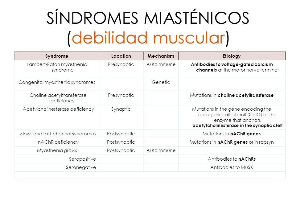 SÍNDROMES MIASTÉNICOS (debilidad muscular)