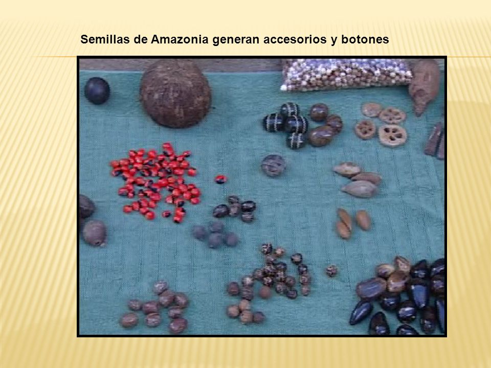 Semillas de Amazonia generan accesorios y botones