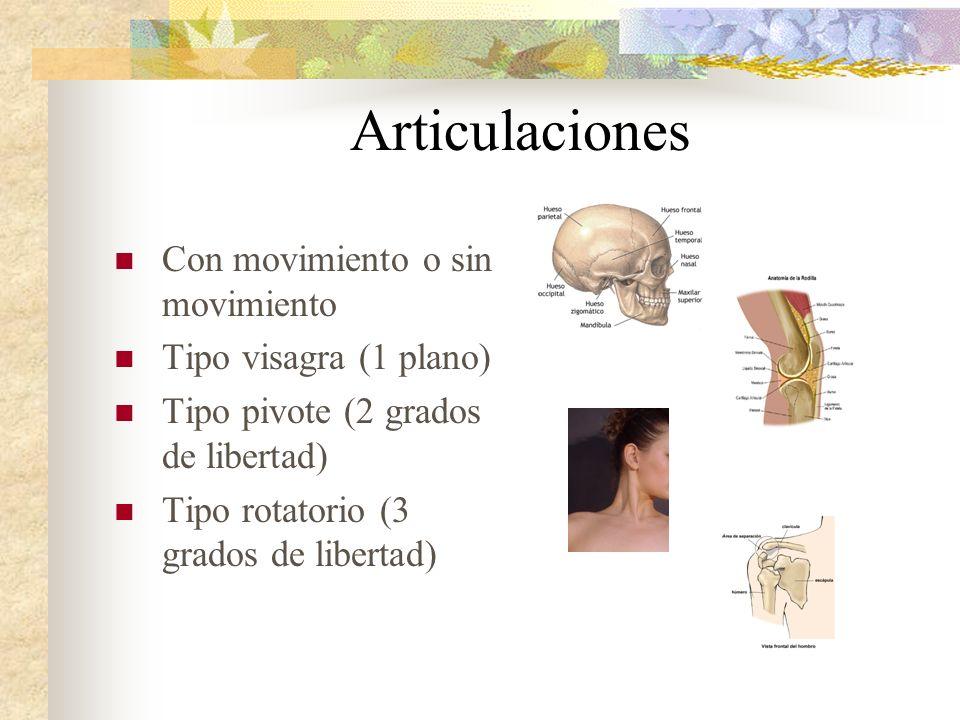 Articulaciones Con movimiento o sin movimiento Tipo visagra (1 plano)