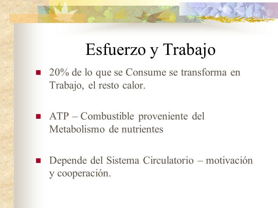 Esfuerzo y Trabajo 20% de lo que se Consume se transforma en Trabajo, el resto calor. ATP – Combustible proveniente del Metabolismo de nutrientes.
