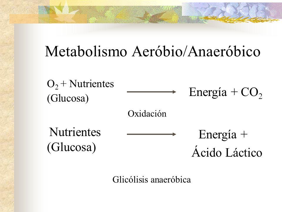Metabolismo Aeróbio/Anaeróbico