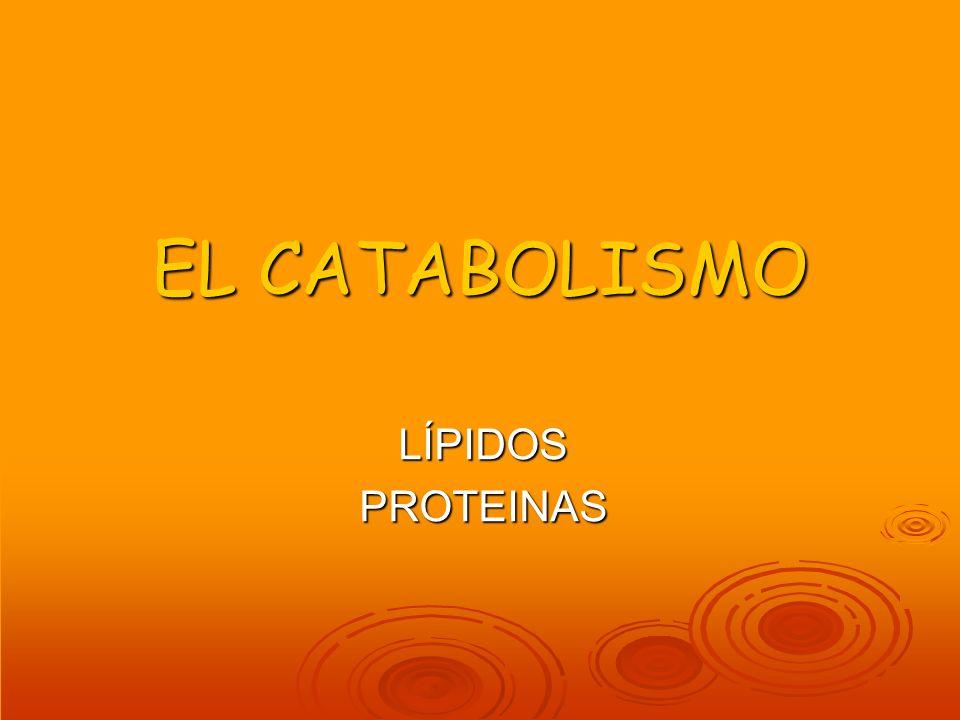 EL CATABOLISMO LÍPIDOS PROTEINAS