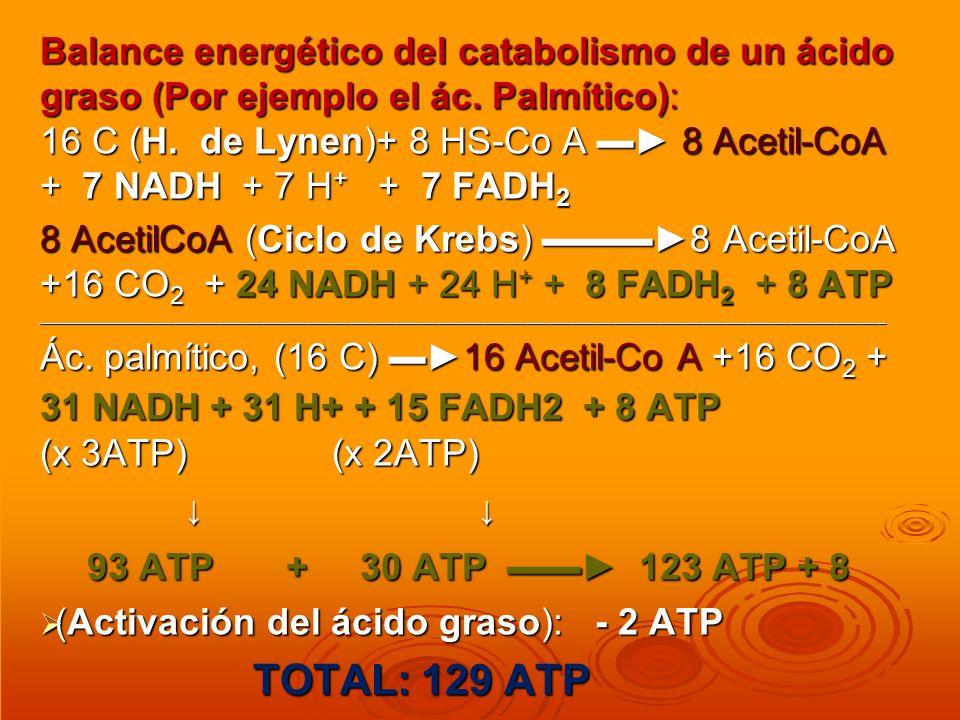 93 ATP + 30 ATP ▬▬► 123 ATP + 8 TOTAL: 129 ATP