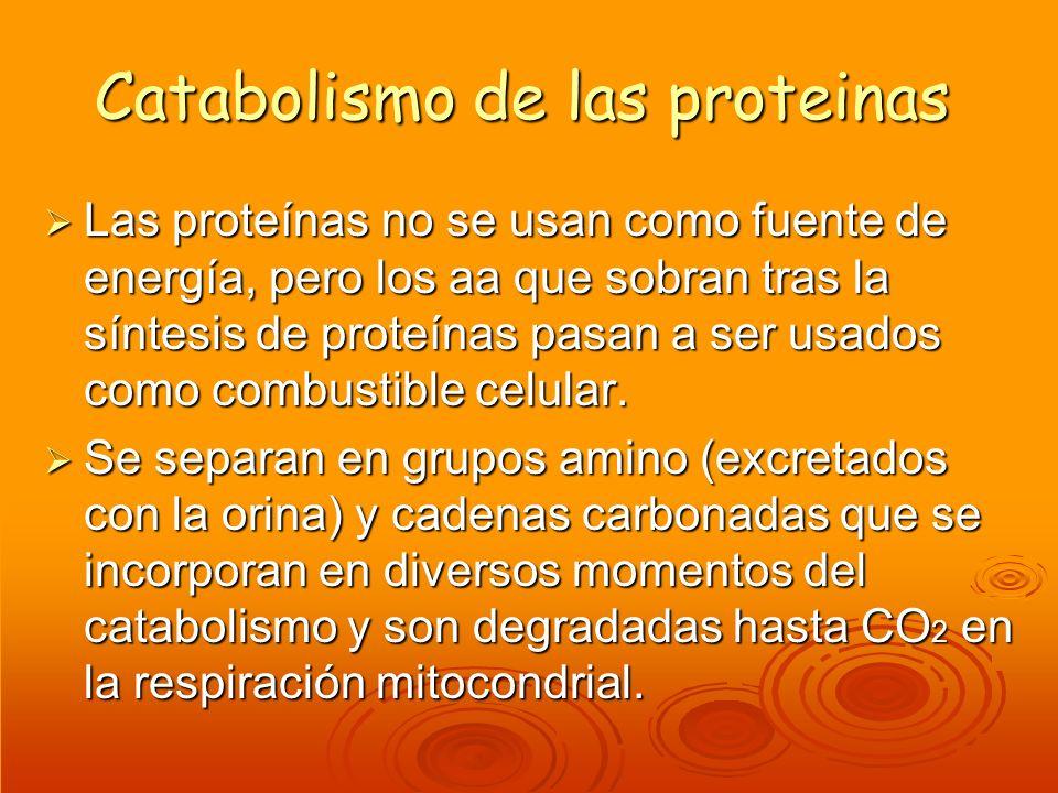 Catabolismo de las proteinas