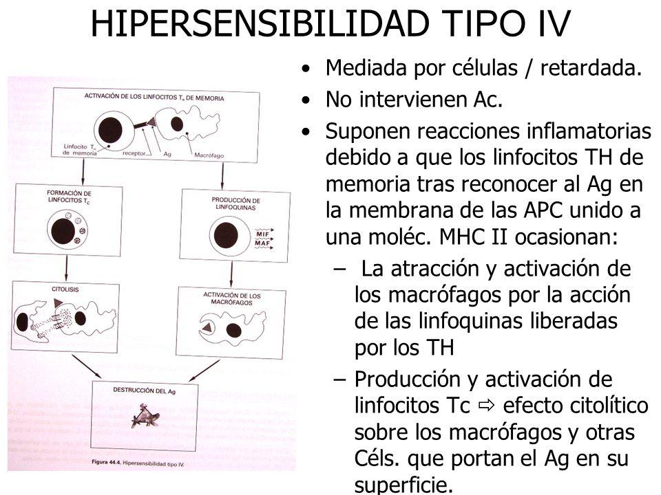 HIPERSENSIBILIDAD TIPO IV