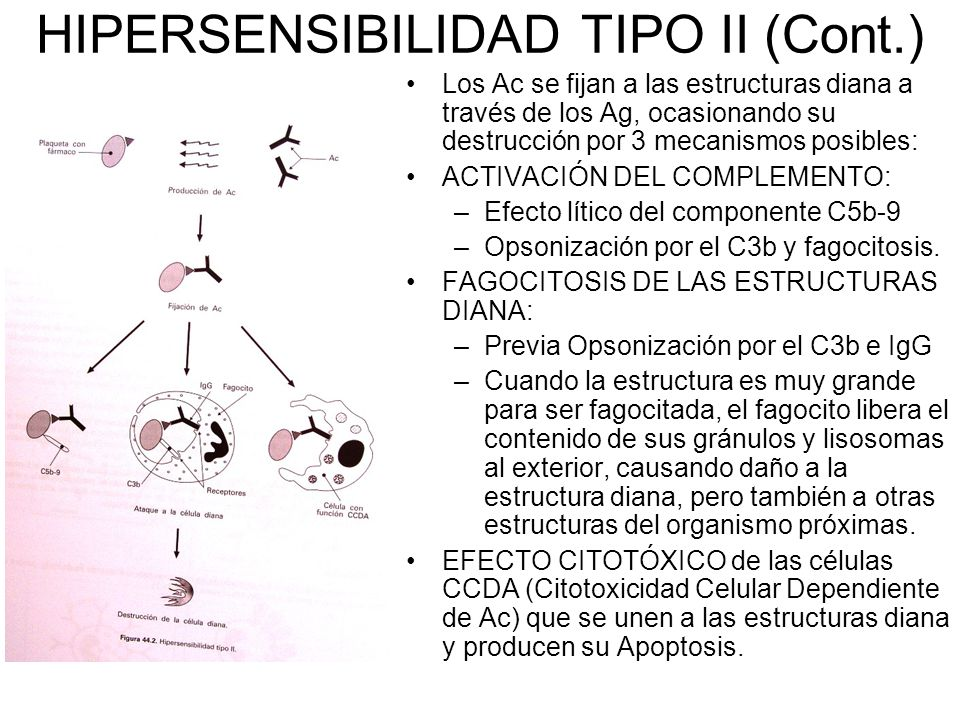 HIPERSENSIBILIDAD TIPO II (Cont.)