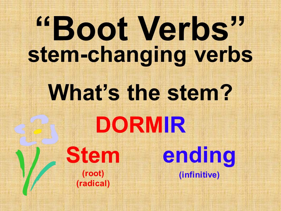Boot Verbs stem-changing verbs What's the stem DORMIR ending Stem