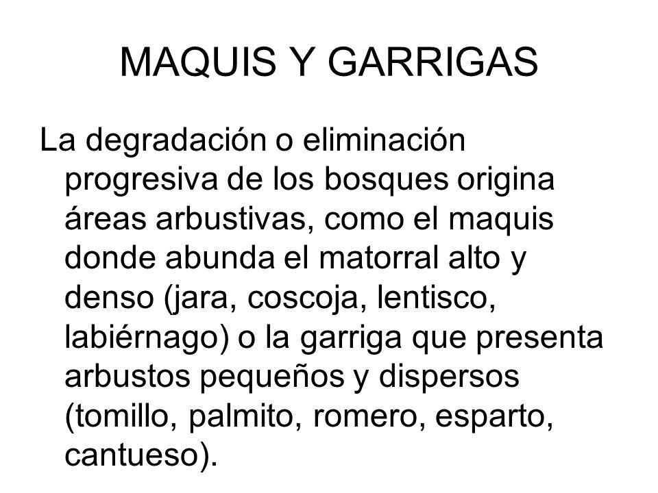 MAQUIS Y GARRIGAS
