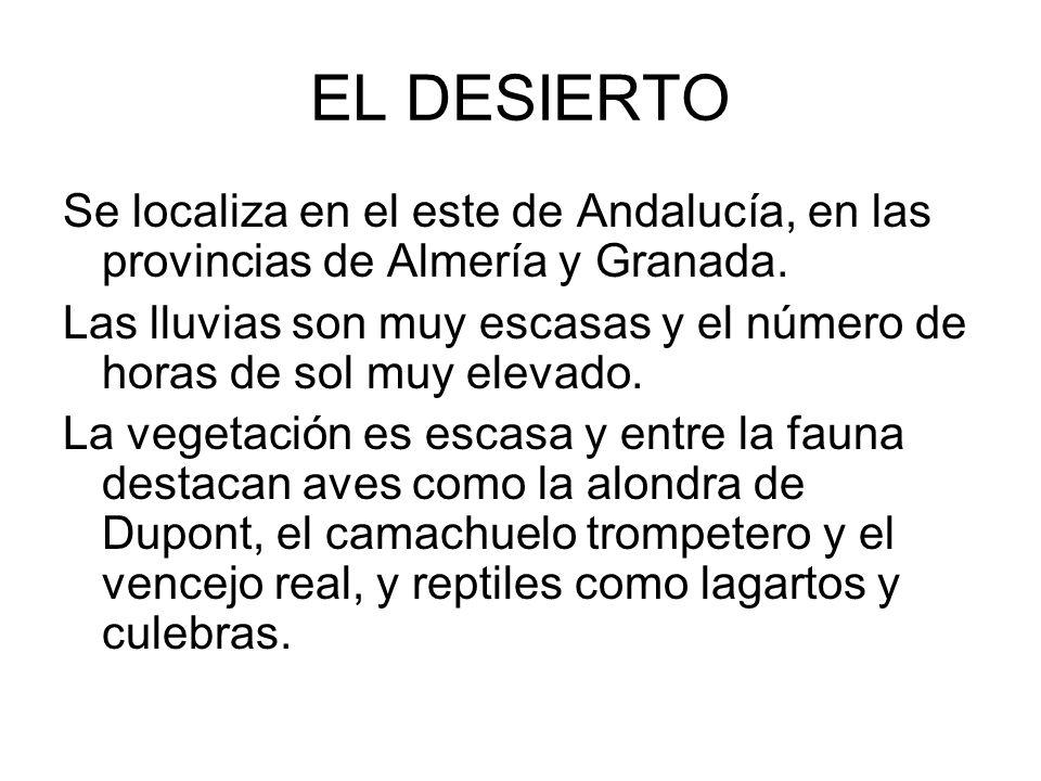 EL DESIERTOSe localiza en el este de Andalucía, en las provincias de Almería y Granada.