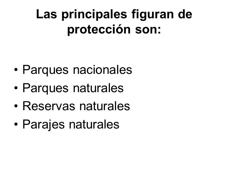 Las principales figuran de protección son: