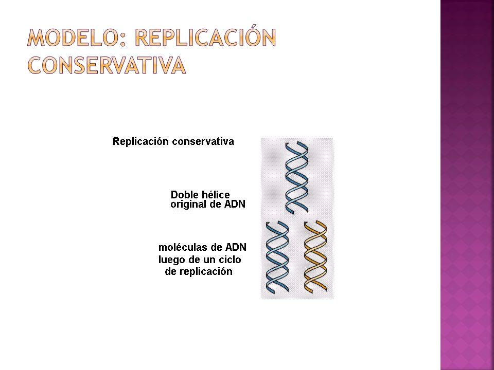 Modelo: Replicación Conservativa