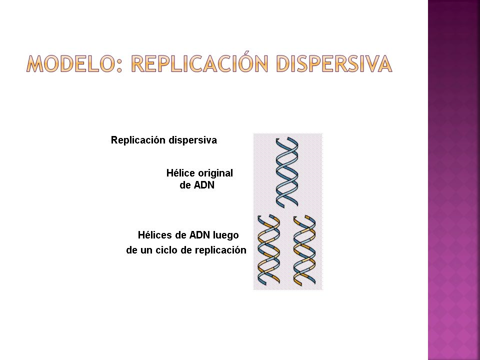 Modelo: Replicación Dispersiva