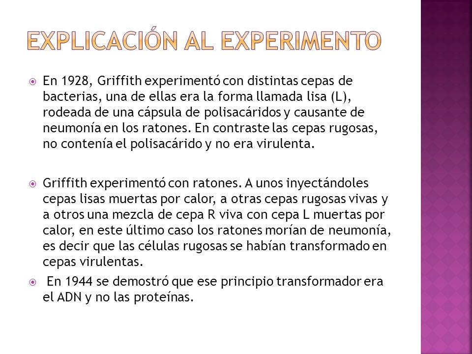 Explicación al experimento