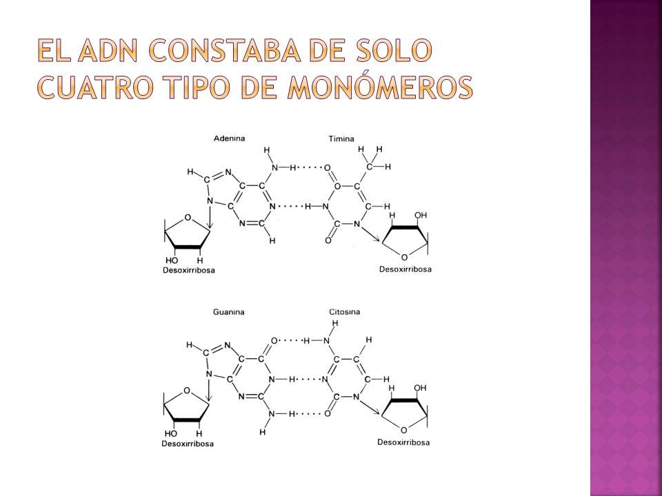 el ADN constaba de solo cuatro tipo de monómeros