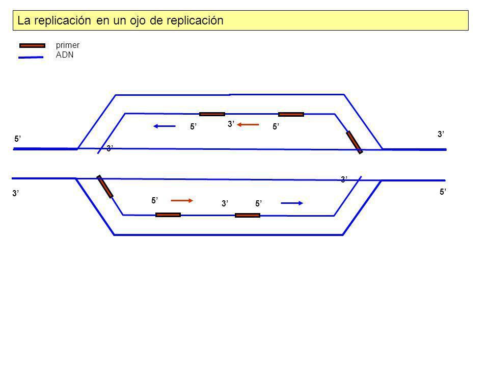 La replicación en un ojo de replicación