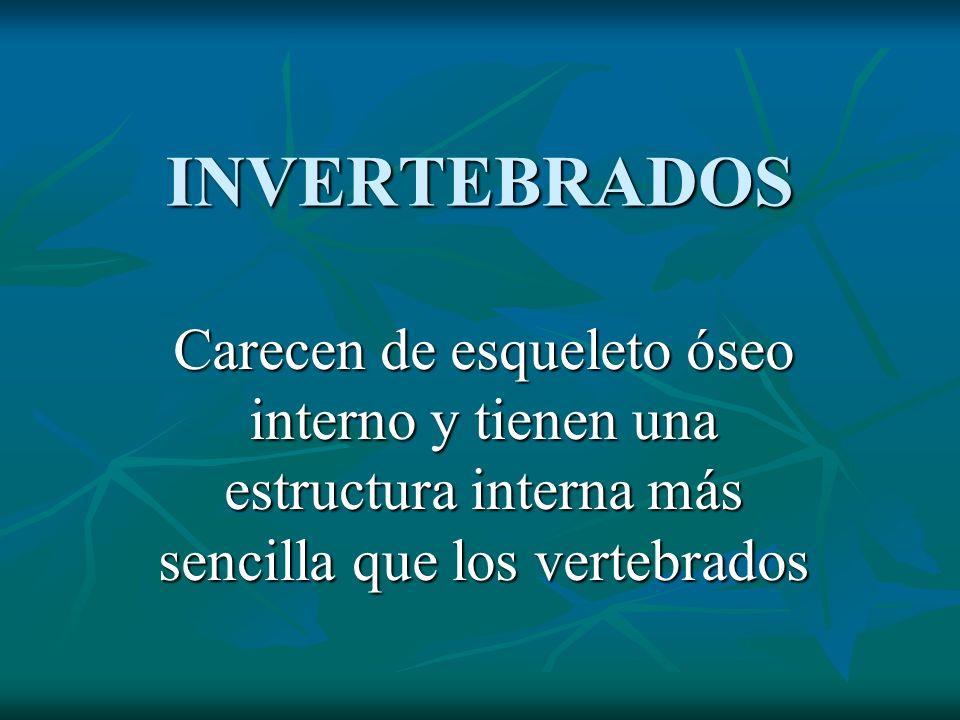 INVERTEBRADOS Carecen de esqueleto óseo interno y tienen una estructura interna más sencilla que los vertebrados.