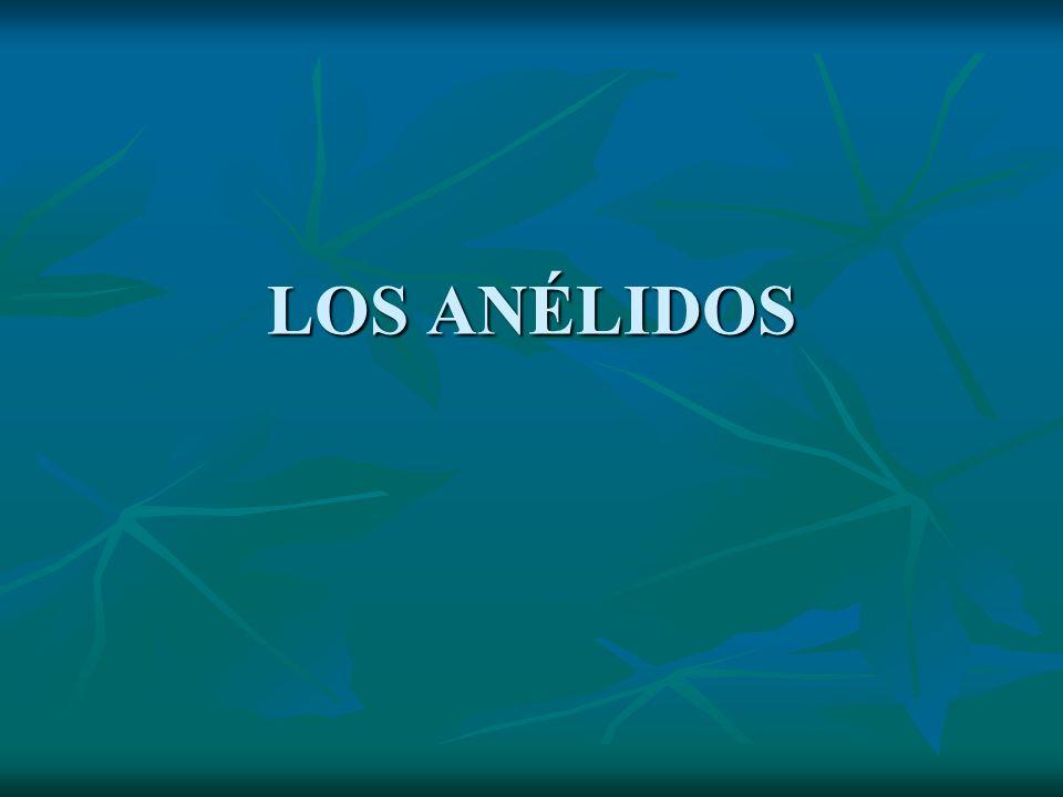 LOS ANÉLIDOS