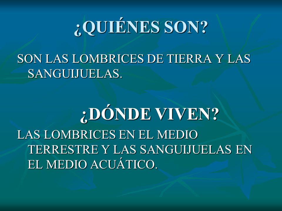 ¿QUIÉNES SON SON LAS LOMBRICES DE TIERRA Y LAS SANGUIJUELAS.