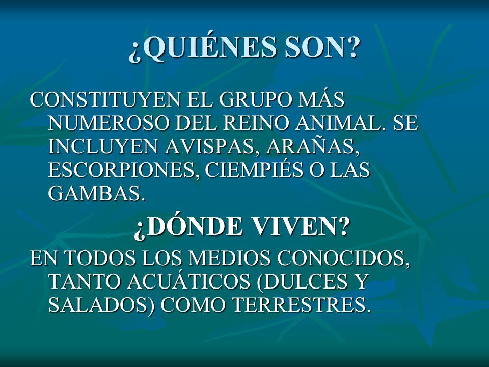¿QUIÉNES SON CONSTITUYEN EL GRUPO MÁS NUMEROSO DEL REINO ANIMAL. SE INCLUYEN AVISPAS, ARAÑAS, ESCORPIONES, CIEMPIÉS O LAS GAMBAS.