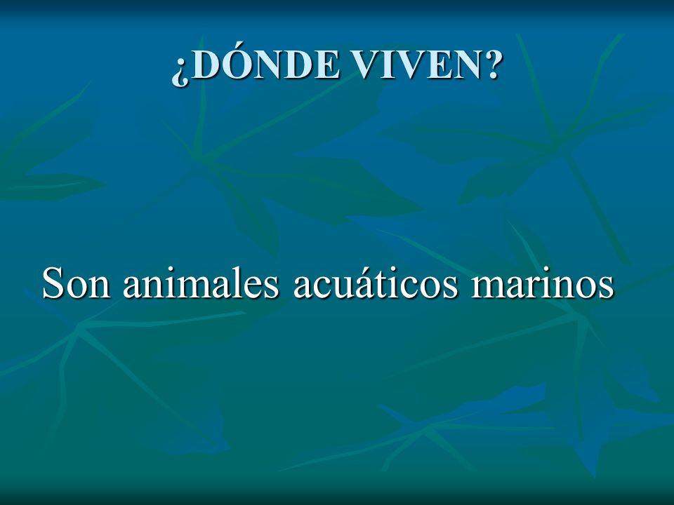Son animales acuáticos marinos