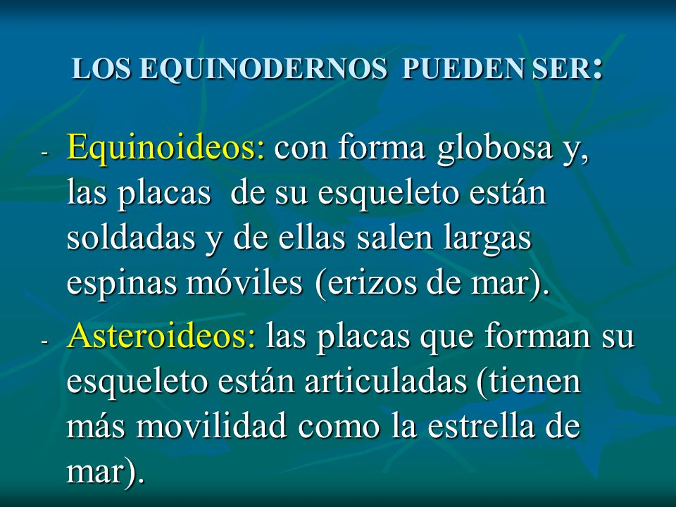 LOS EQUINODERNOS PUEDEN SER: