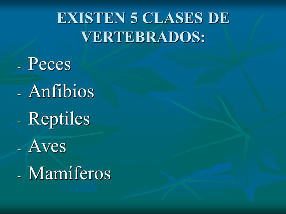 EXISTEN 5 CLASES DE VERTEBRADOS: