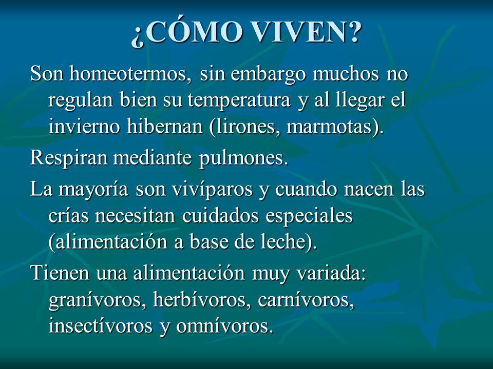 ¿CÓMO VIVEN Son homeotermos, sin embargo muchos no regulan bien su temperatura y al llegar el invierno hibernan (lirones, marmotas).