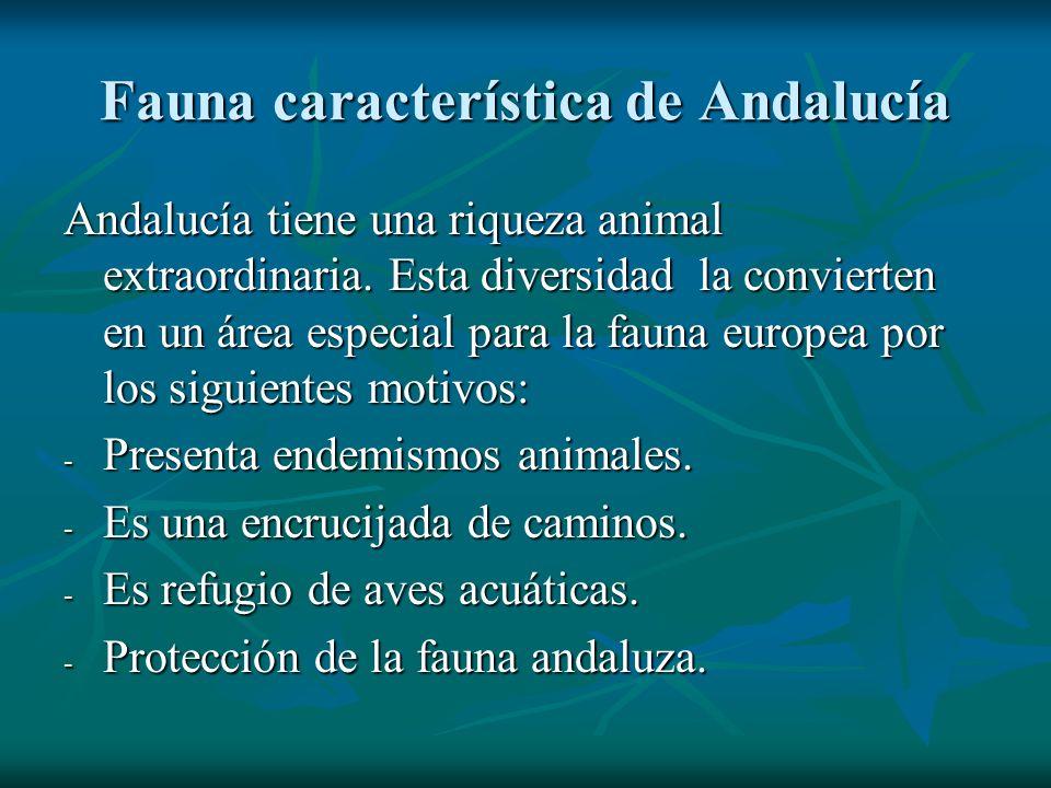 Fauna característica de Andalucía