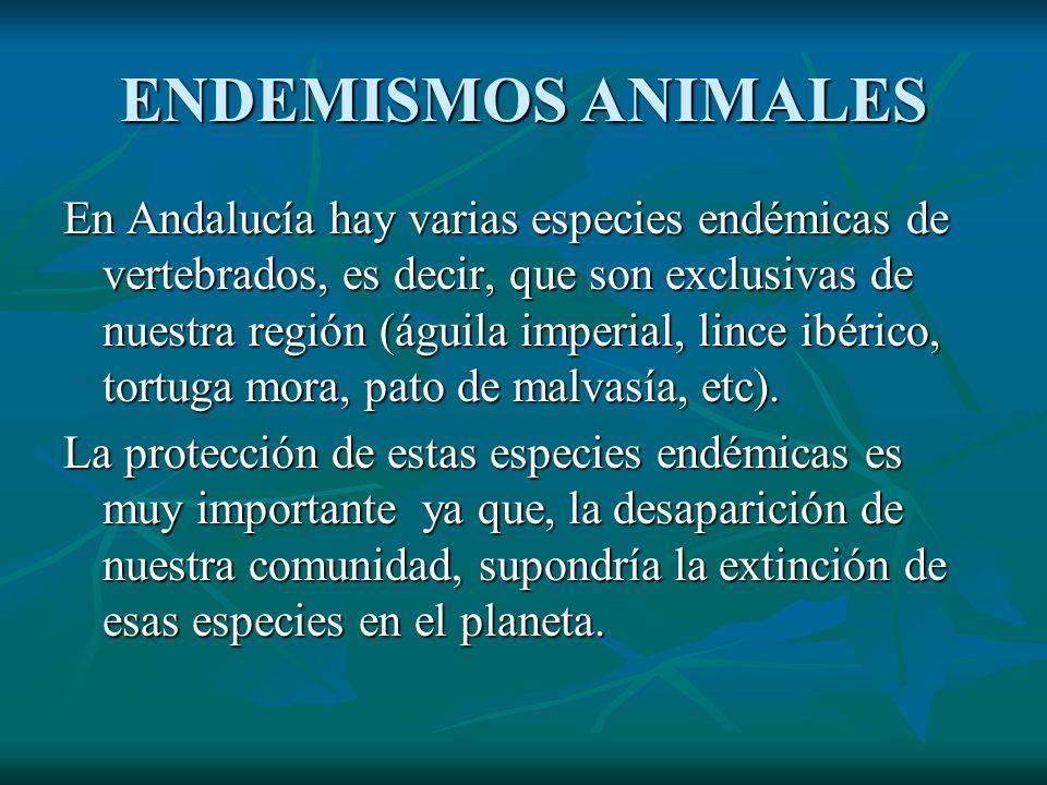 ENDEMISMOS ANIMALES