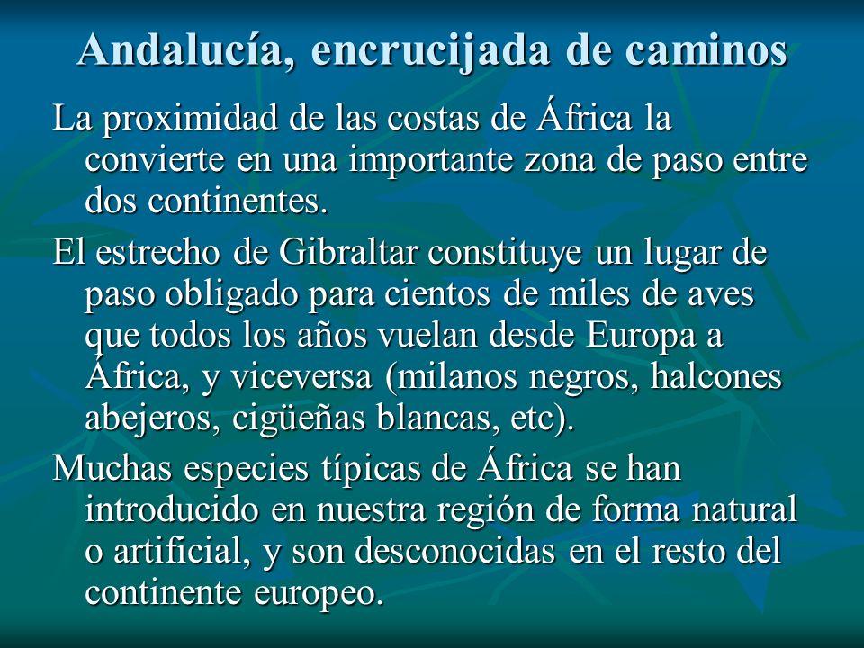 Andalucía, encrucijada de caminos