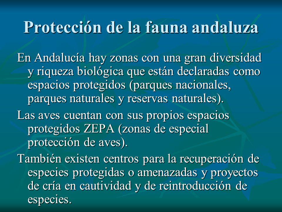 Protección de la fauna andaluza