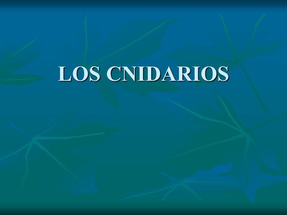 LOS CNIDARIOS