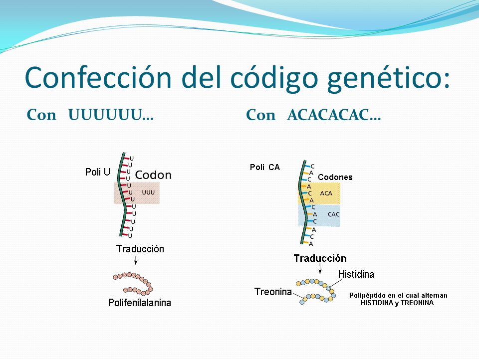 Confección del código genético: