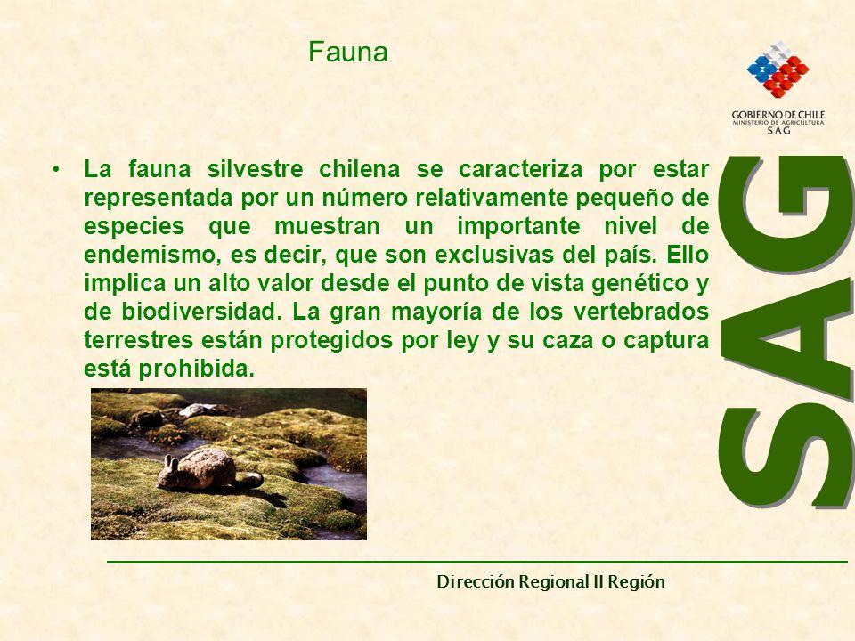 SAG Dirección Regional II Región. Fauna.