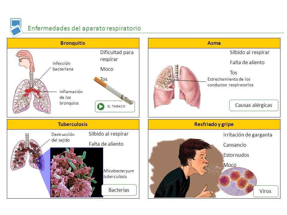 Magnífico Anatomía Del Asma Foto - Anatomía de Las Imágenesdel ...