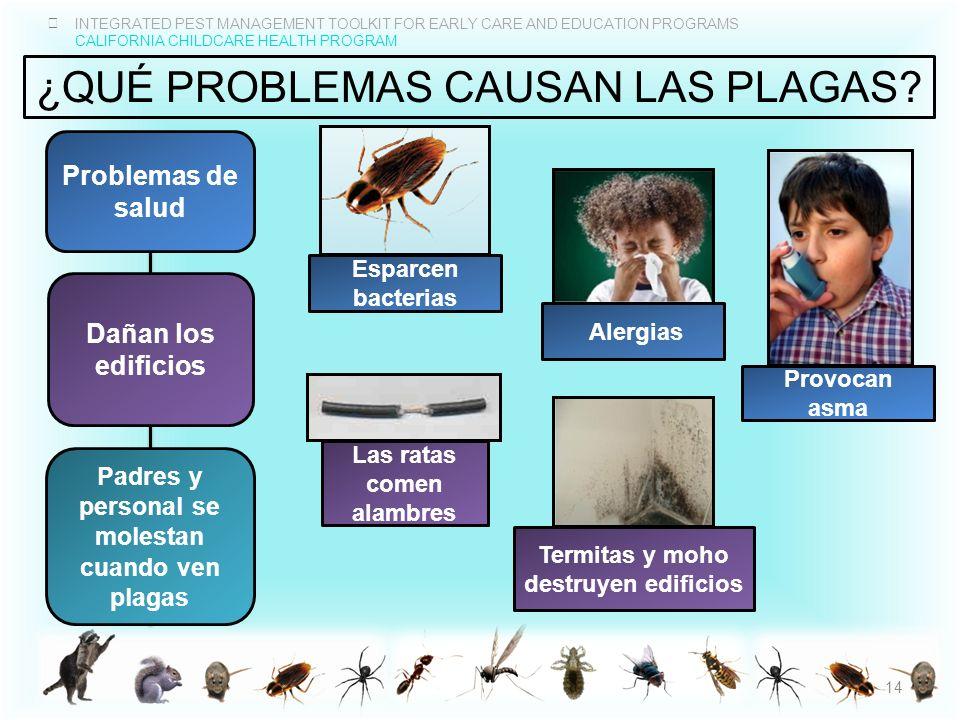 ¿QuÉ problemas causan las plagas