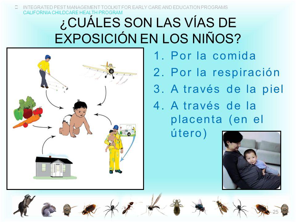 ¿CuÁles son las vías de exposición en los niños