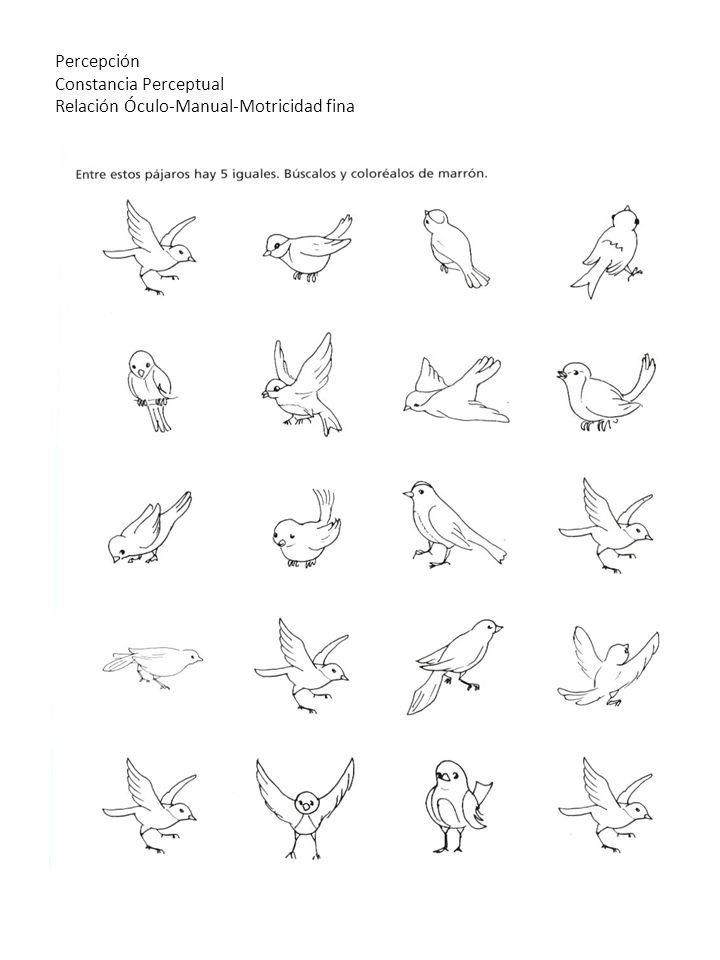 Percepción Constancia Perceptual Relación Óculo-Manual-Motricidad fina